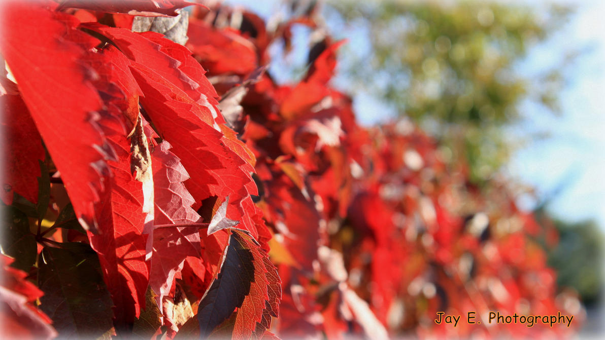 Signs of Fall 154 by Spillsin
