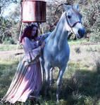 renaissance horse ride stock 2