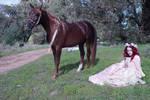 renaissance horse ride stock 4