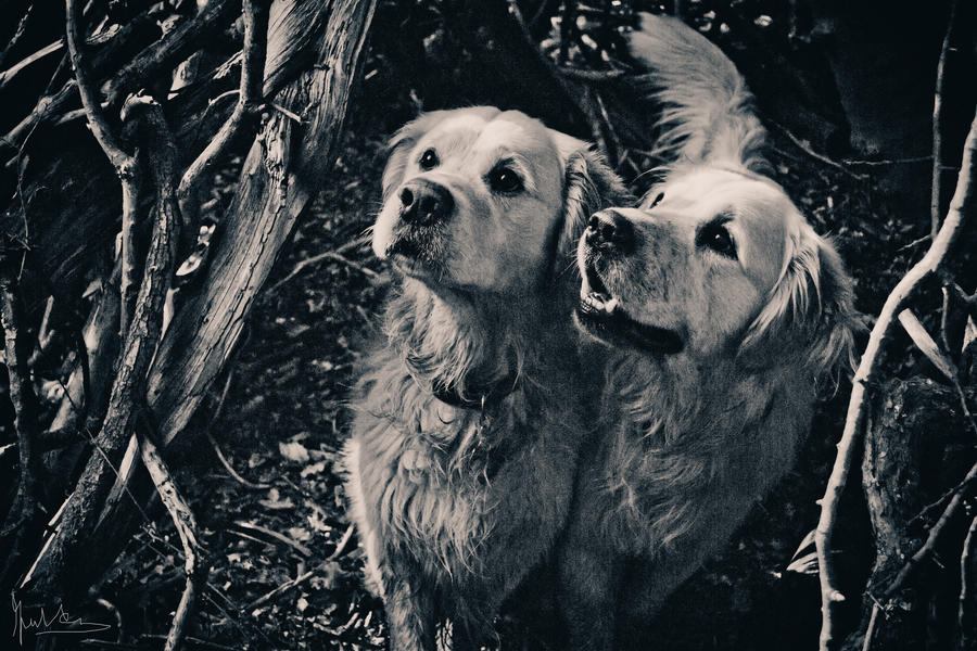 The Nebraska Hounds by TLFullerPhotographer