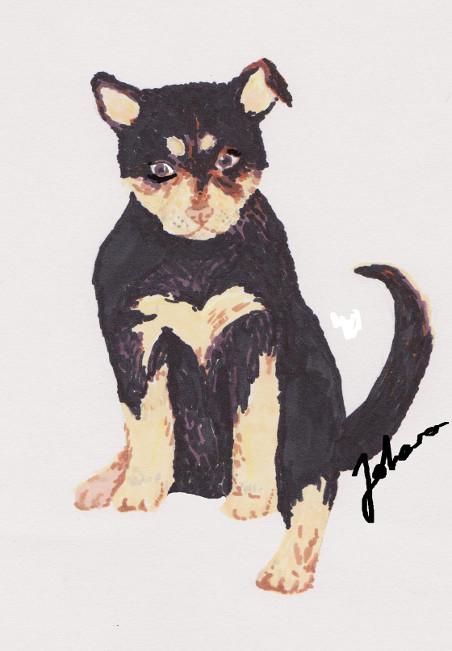 A puppy: Lapinporokoira