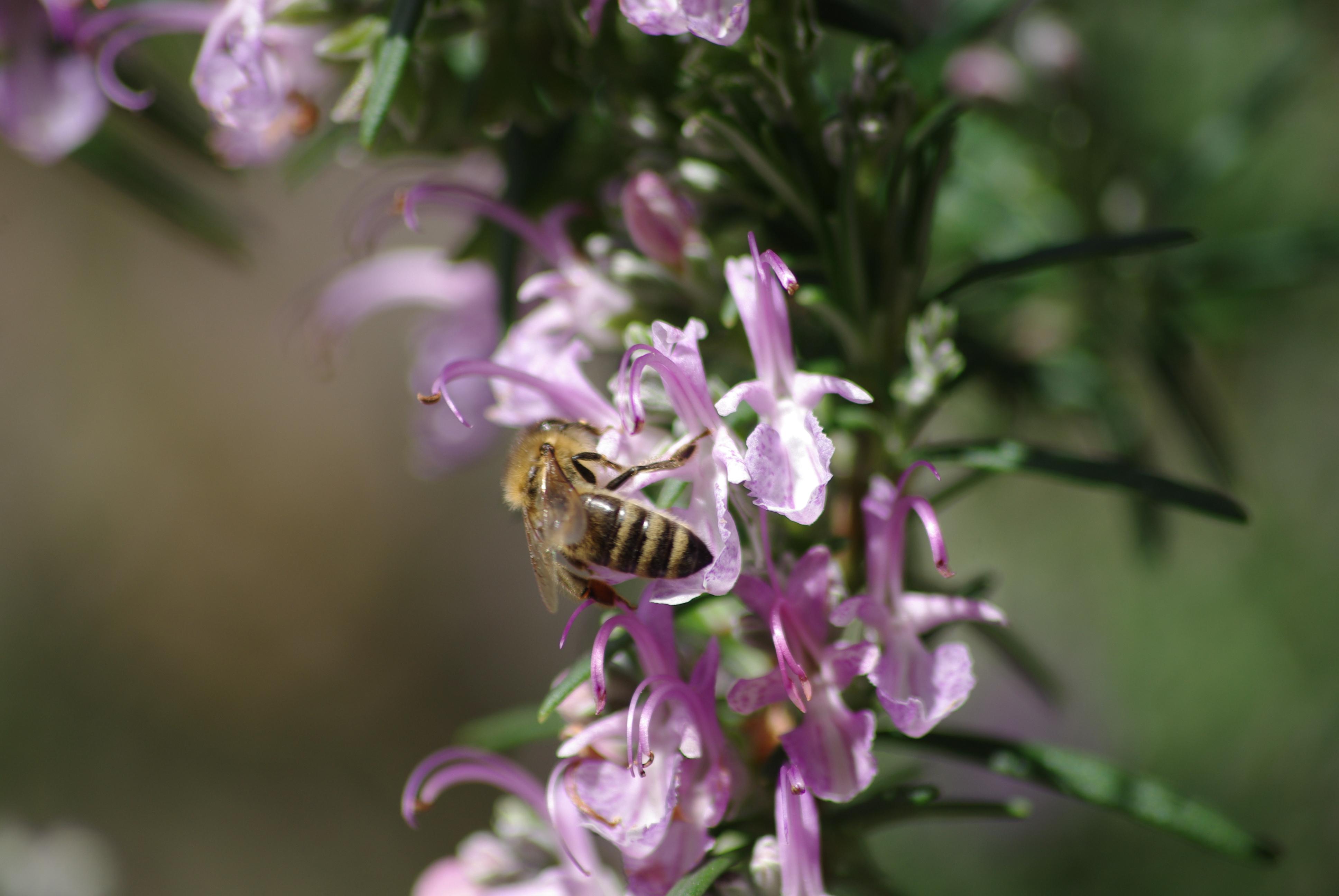 Bee Pr0n by CAmpoo691