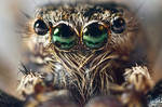 Jumping Spider series 7 maxmag