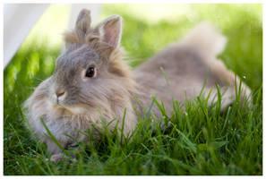 rabbit by d3r-t