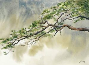 Pine tree study