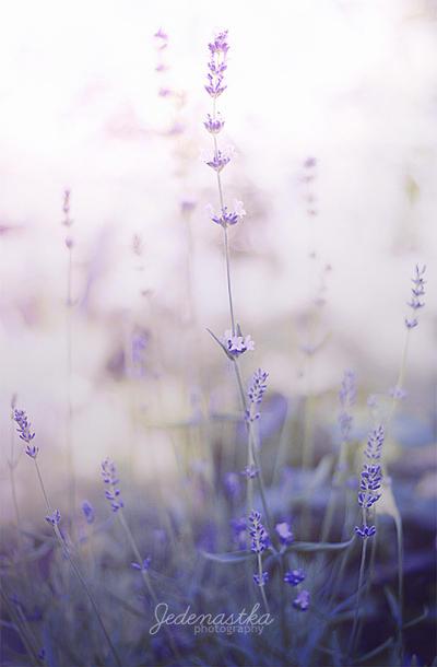 Touch the sky by Jedenastka