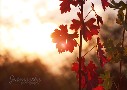 End of the day by Jedenastka