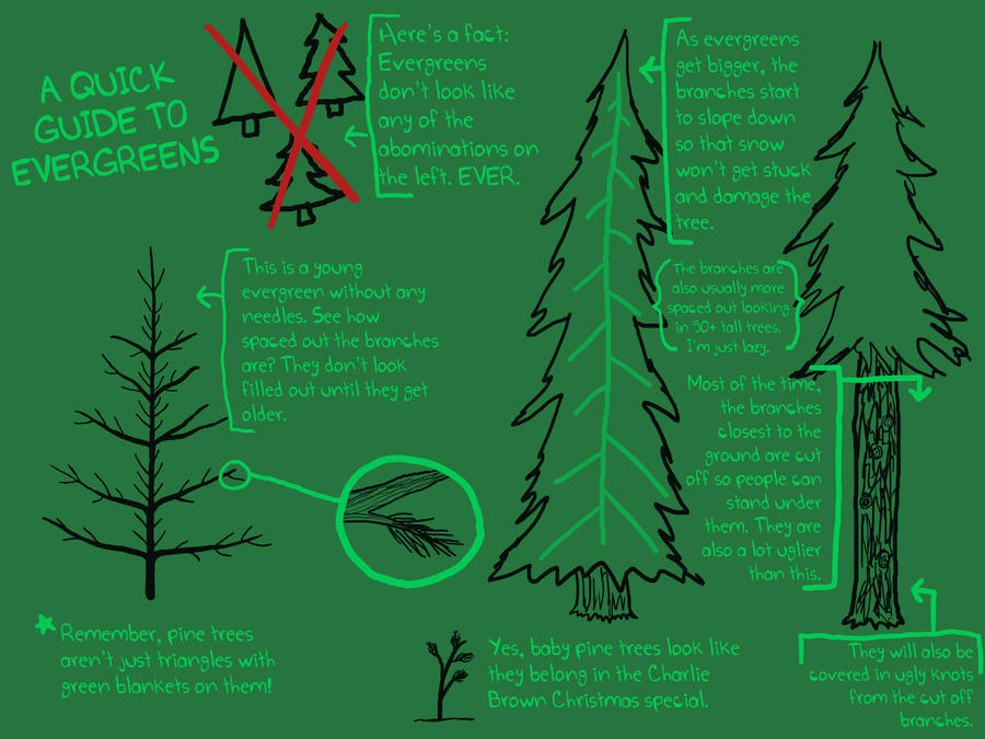A Guide to Evergreens