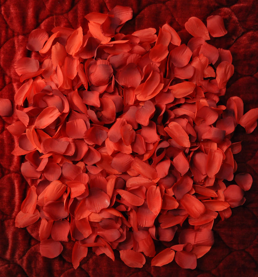Red Silk Rose Pedals 009 NF by MichaelGBrown