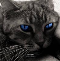 Kitty by kienzan