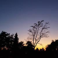 skylove sunset