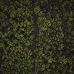 tree mavic mini shot zawiercie