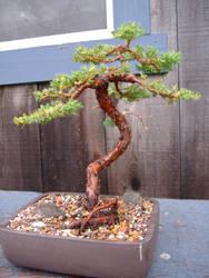 Tree no. 0020