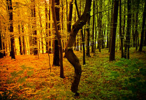 autumn is coming the Polish one is so beautiful by ateist-kleranty