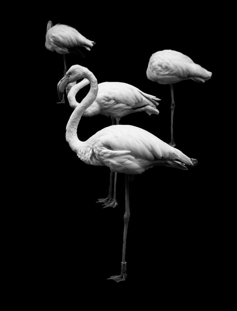 we flamingos by ateist-kleranty