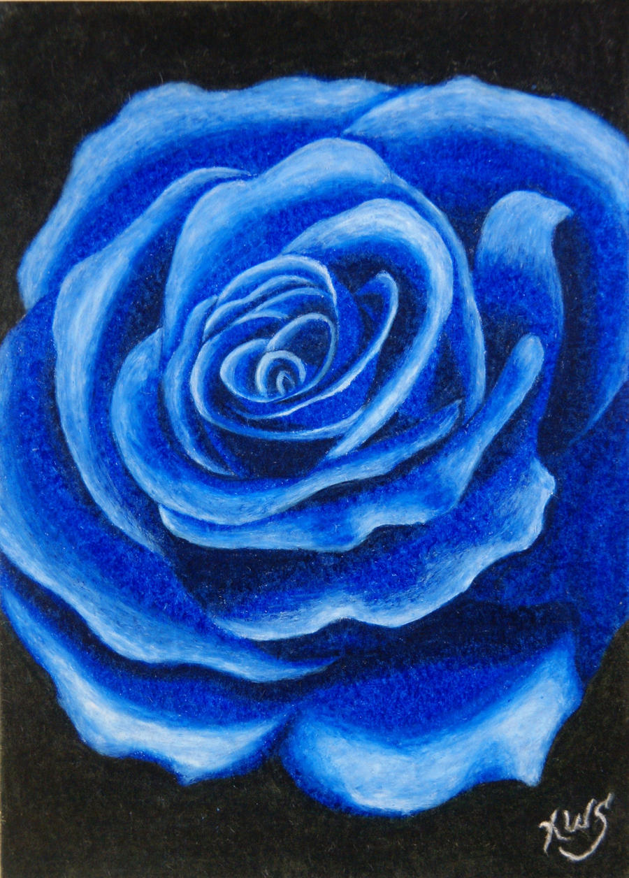 Blue Rose After Spray By