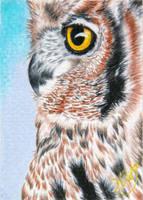 Owl II by KW-Scott
