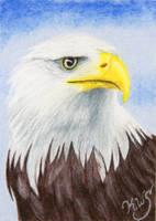 American Bald Eagle by KW-Scott