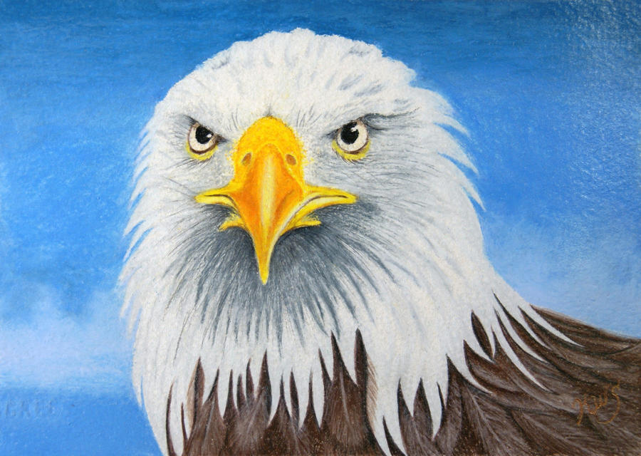eagle is pissed off jpg 1152x768
