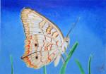 Butterfly In The Long Grass by KW-Scott
