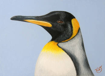 Emperor Penguin by KW-Scott