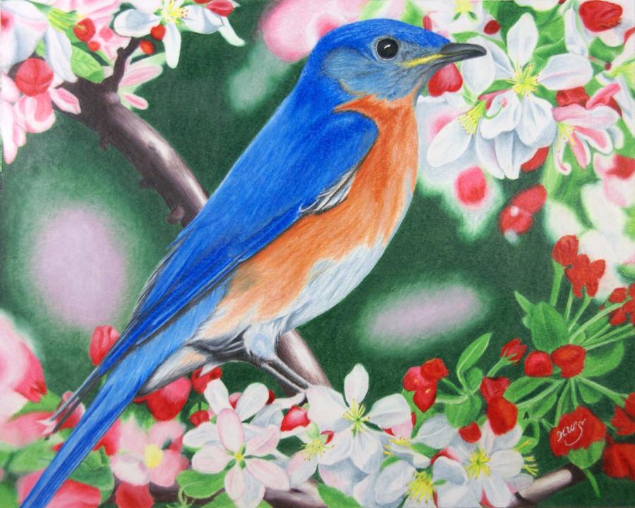 eastern bluebird by kw scott