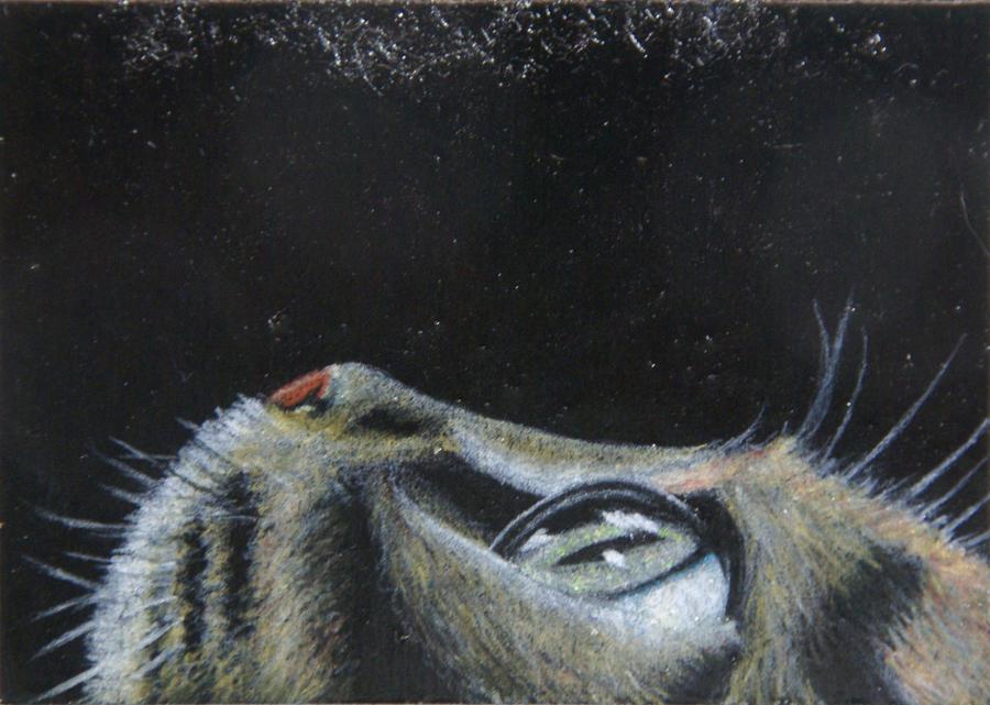 Cat's Eye by KW-Scott