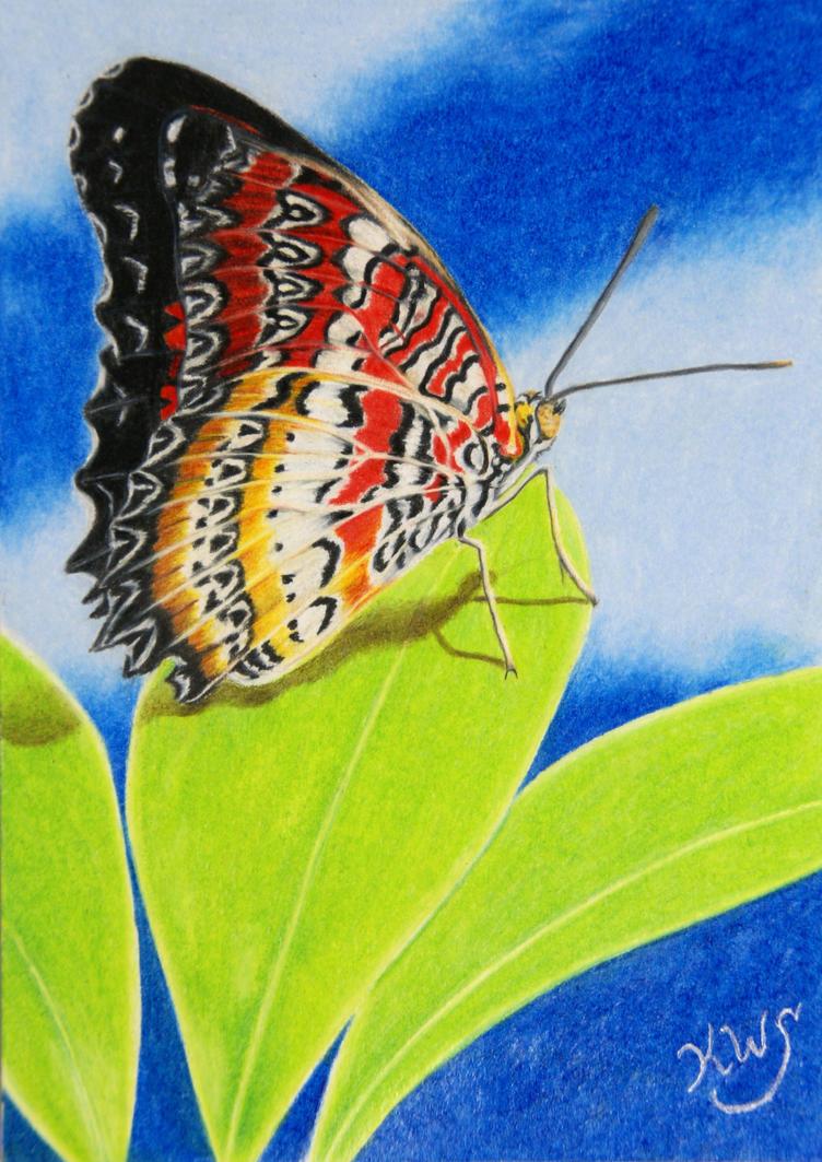 Butterfly On A Leaf by KW-Scott