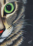 Half Cat Close UP by KW-Scott