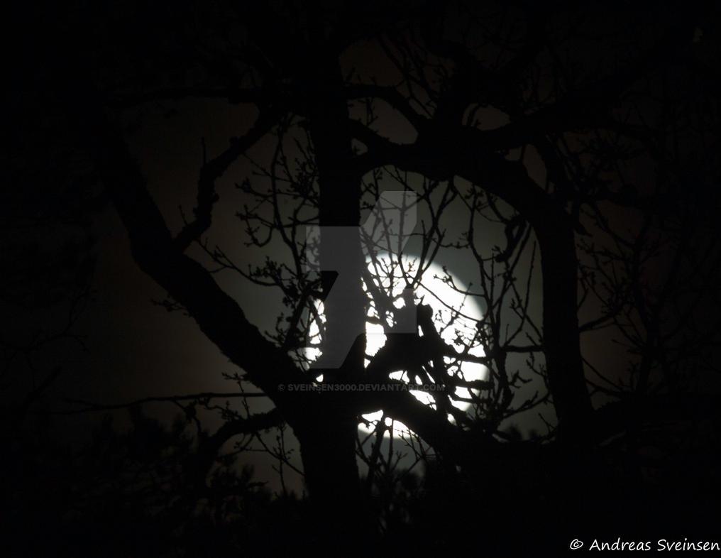 Full moon by sveinsen3000