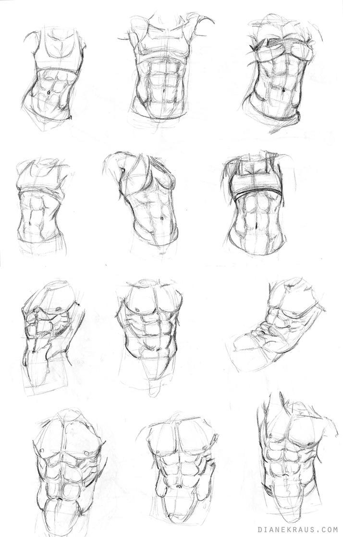 Torso Studies by DianetheKraus