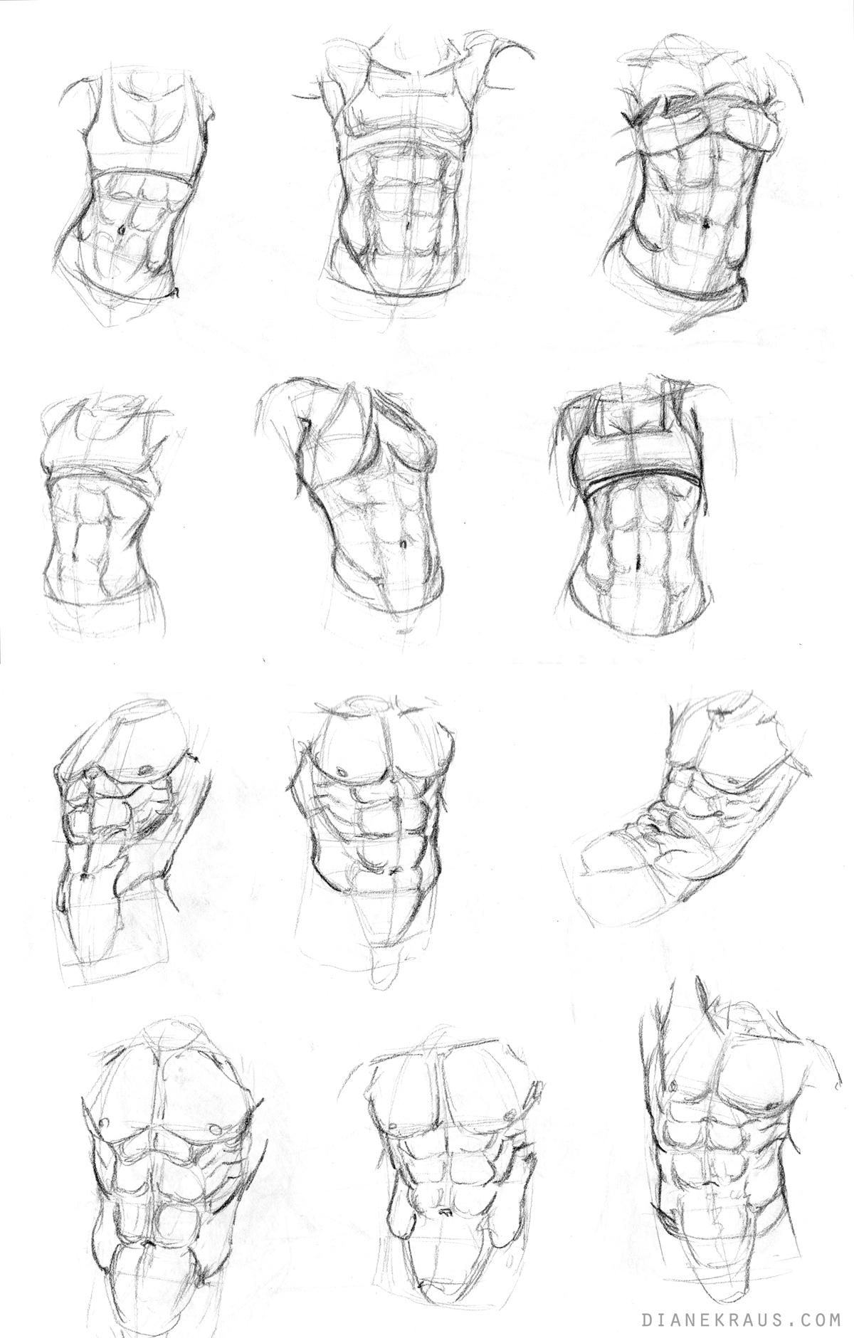torso studies by banjodi on deviantart