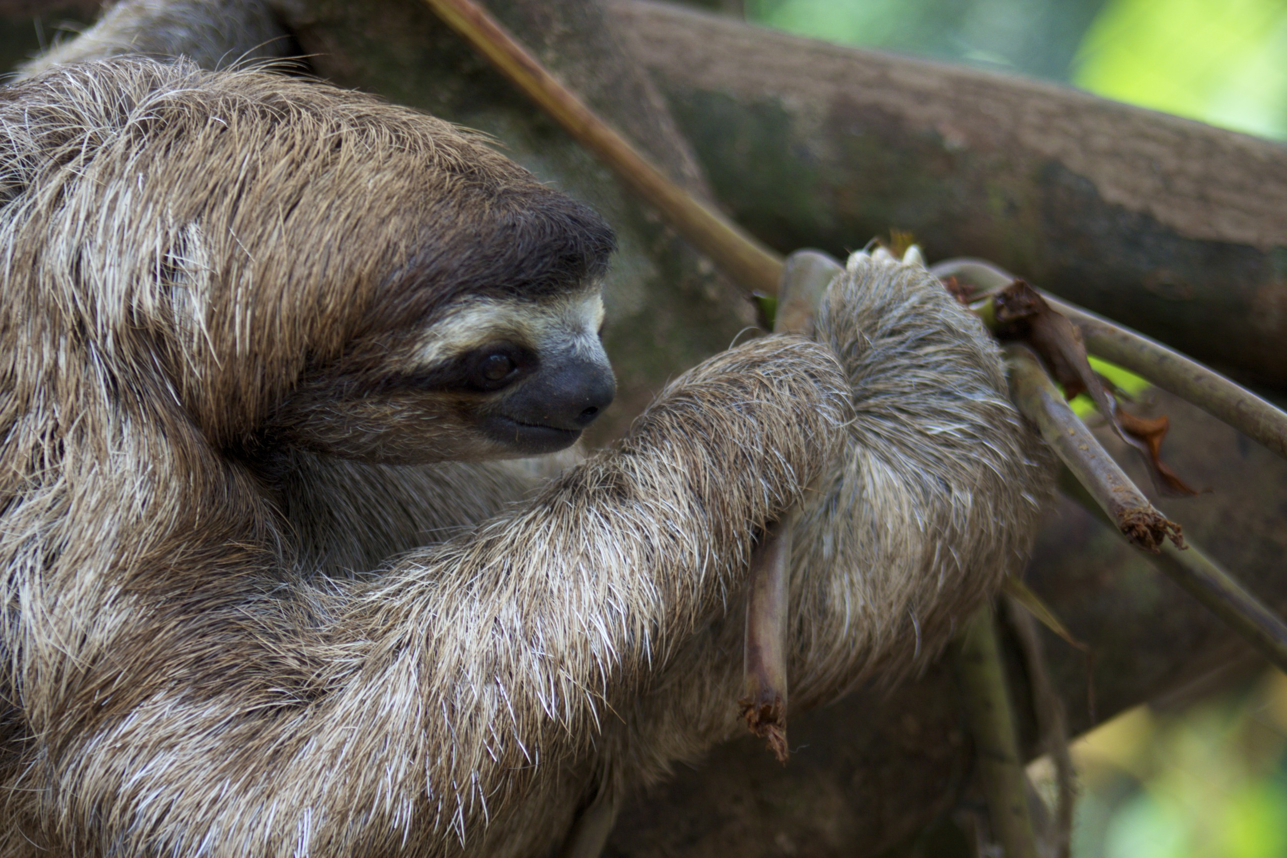 Slothful