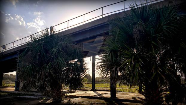 LC14 Floridian Sun