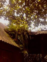 Jungle Rooftops