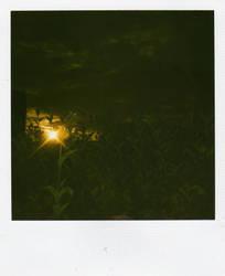 Polaroid 05 by no1Joel