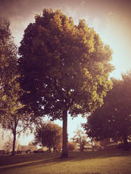 Autumn Tree by no1Joel