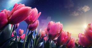 Tulips Island II
