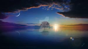 The tree belongs to the sea