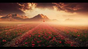 Tulips valley by Ellysiumn