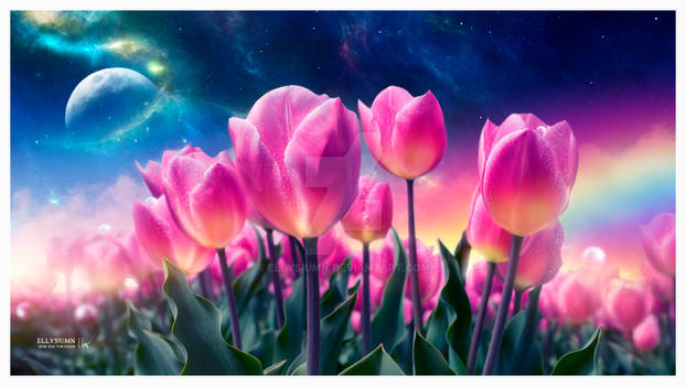 The dreamy tulips