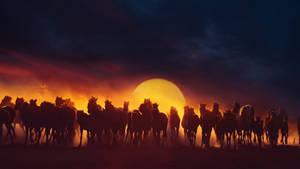 Sunset horse horde