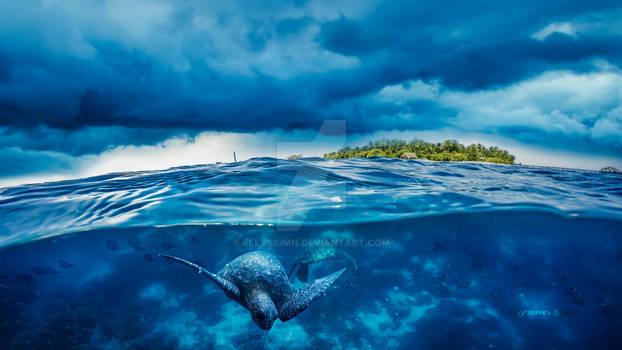 The Turtle Island