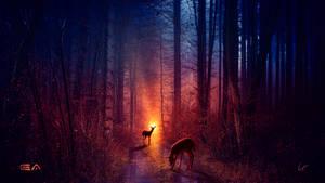 The deer path