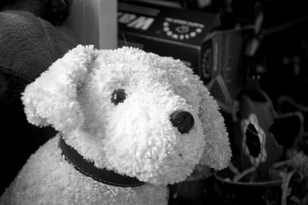 Pup by jasonksmith