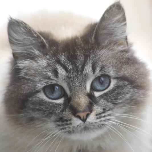 Blue-Eyed Stare by jasonksmith