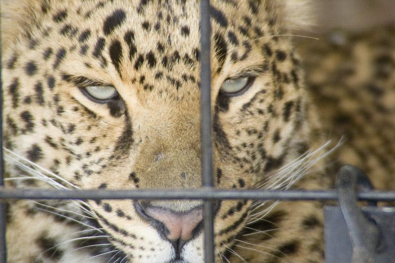 In Captivity by jasonksmith