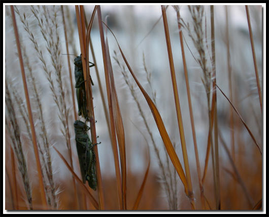 Hiding Before Winter by jasonksmith