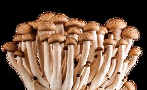 Mushroom-24543 by suedseeengel