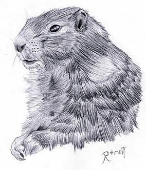 Marmot!
